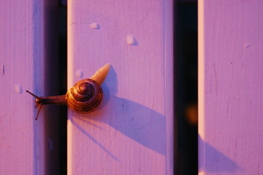 Snail trip.   Wood Snail Close-up Selective Focus Brown Evening Focus On Foreground Nature Bench Warnemünde Rostock Germany Deutschland Purple Pink Getting Inspired Taking Photos Vacation Sony SLT-A58 Eye4photography  EyeEm Best Shots EyeEm Nature Lover Beauty In Nature Traveling