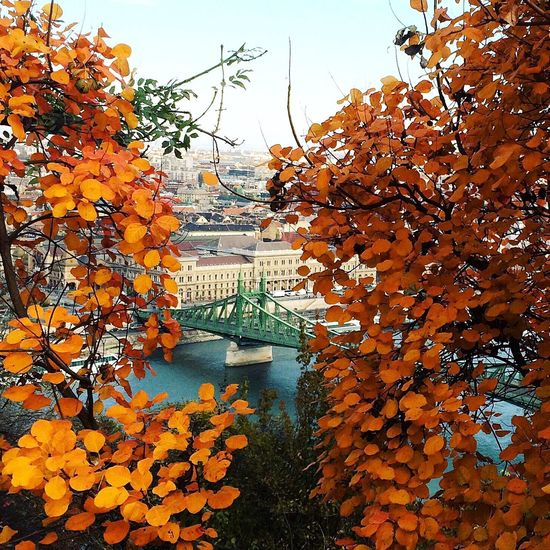 Autumn Leaf Orange Color Tree Change Beauty In Nature Nature Budapest Bridge Outdoors ősz Day Growth No People Building Exterior Branch Architecture Scenics Sky Flower Fragility Close-up Maple
