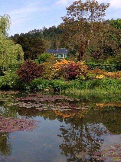 Water Reflections La visite continue côté des nymphéa ! Flower Collection Beautiful Nature Gardening