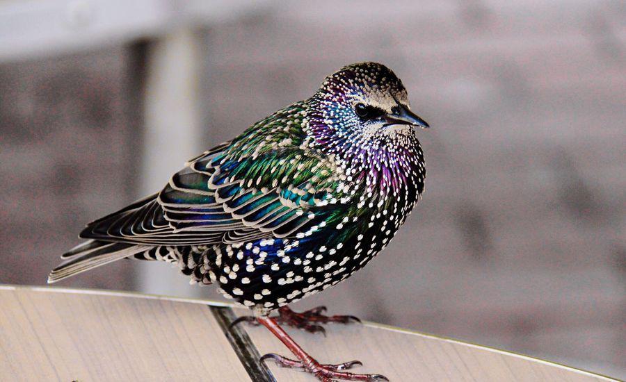 🐧 Bird Bird Photography Nature Nature_collection Beauty