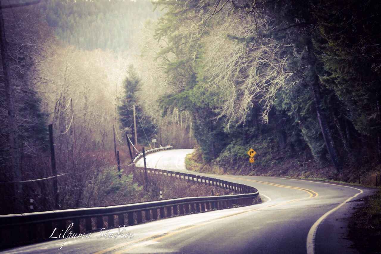 road, tree, transportation, nature, curve, the way forward, no people, forest, scenics, mountain, outdoors, winding road, beauty in nature, landscape, day