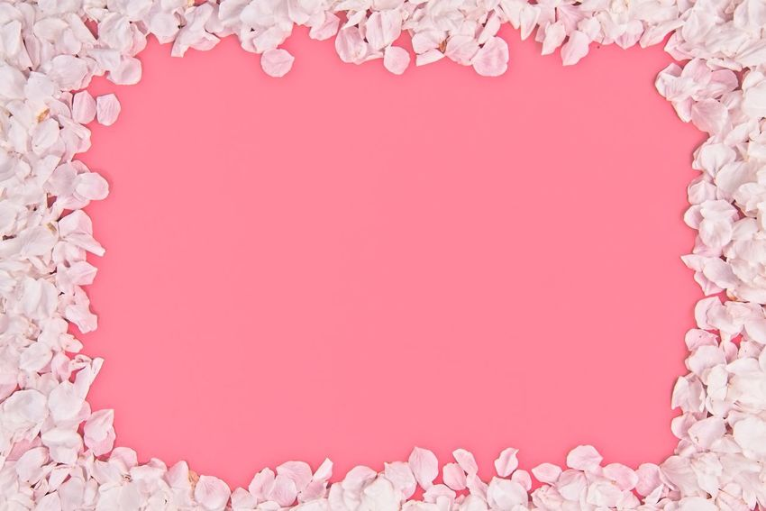 White and pink cherry sakura petal leaves border on red background with usable copy space in the middle April Cherry Nature Pink Background Backgrounds Blooming Blossom Border Colored Background Copy Space Flat Lay Floral Frame Pink Background Pink Color Red Sacura Spring Studio Shot Texture Valentine's Day - Holiday White White Color