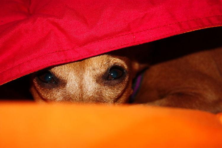Close-up portrait of dog hiding