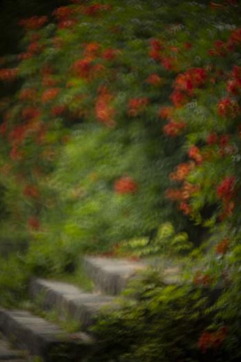 화순 만연사의 능소화 Korea EyeEm Nature Lover EyeEm Selects Hwasun EyeEm Best Shots Tree Flower Forest Autumn Leaf Grass Plant Greenery