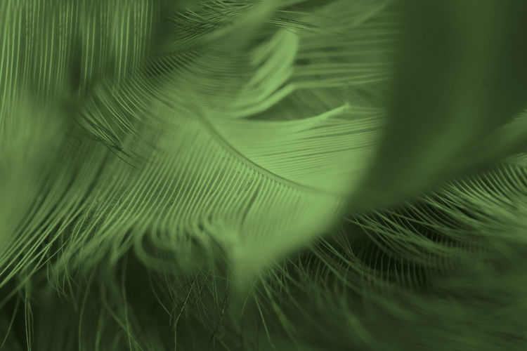 Beautiful feather color light green,black pattern texture background