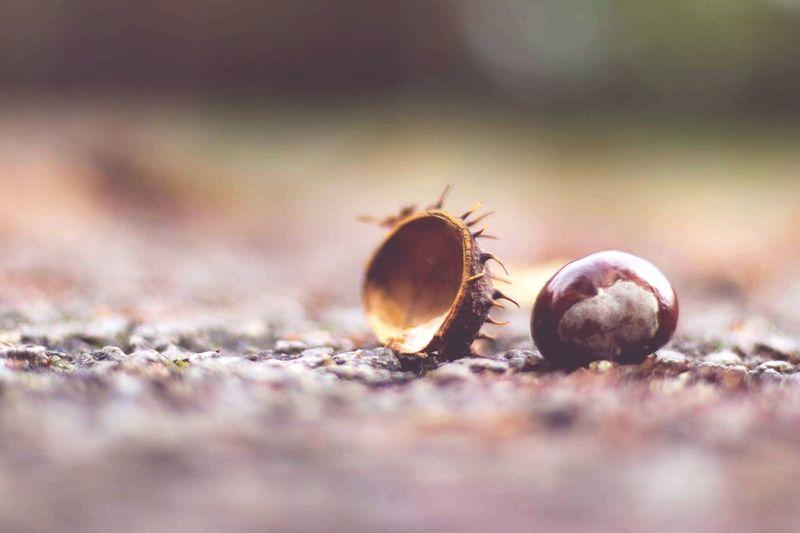 Close-up of nut on ground
