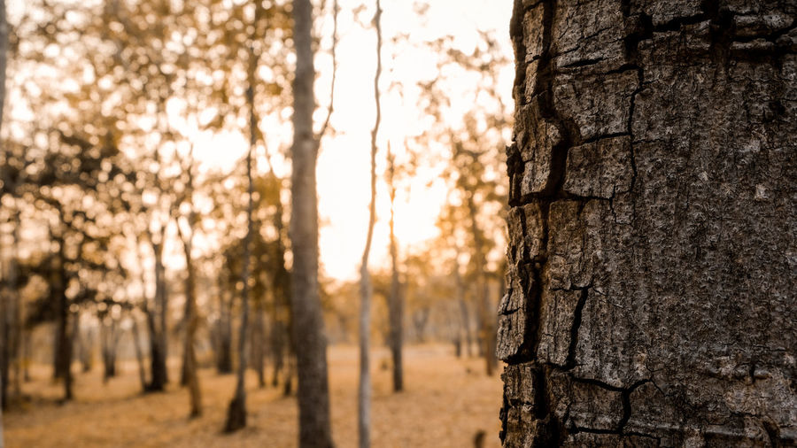 Close-up of tree trunk during sunset