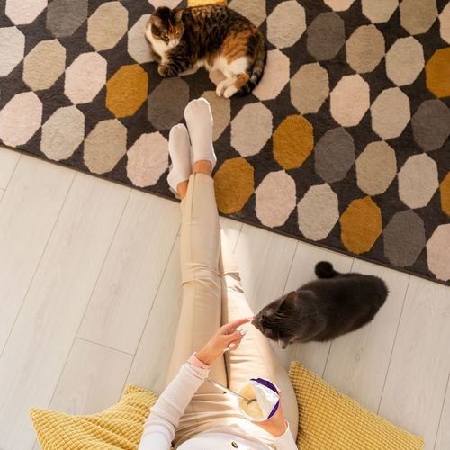 High angle view of cat relaxing on floor