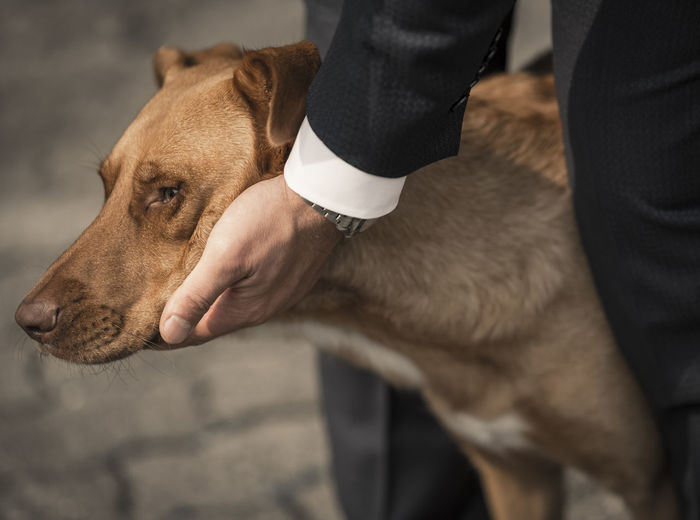 Cropped Hand Of Man Petting Dog On Street