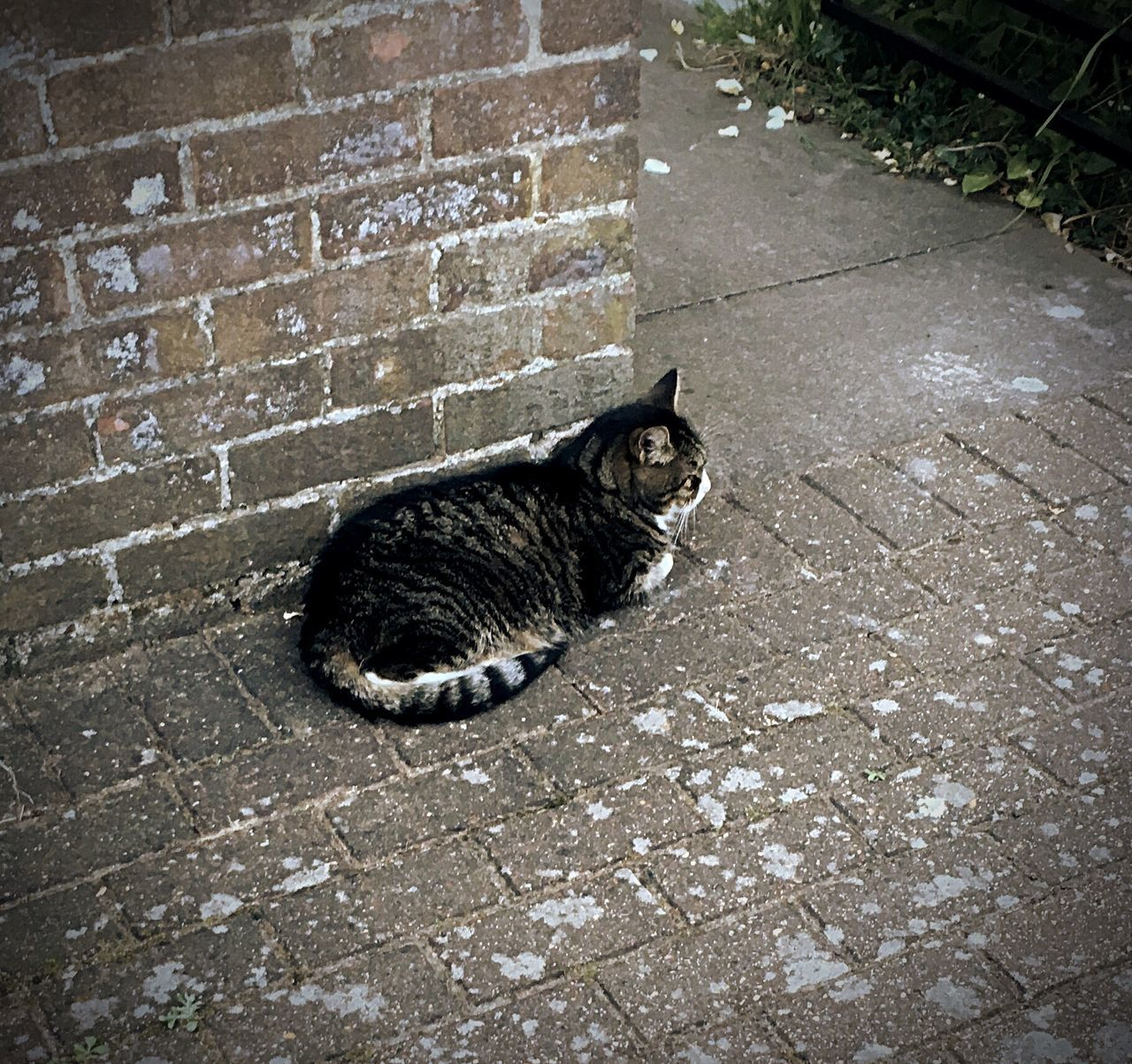 domestic cat, feline, cat, pets, domestic animals, street, one animal, animal themes, outdoors, mammal, sitting, no people, day