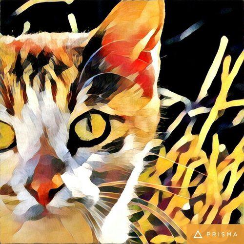 Prisma Cat Like