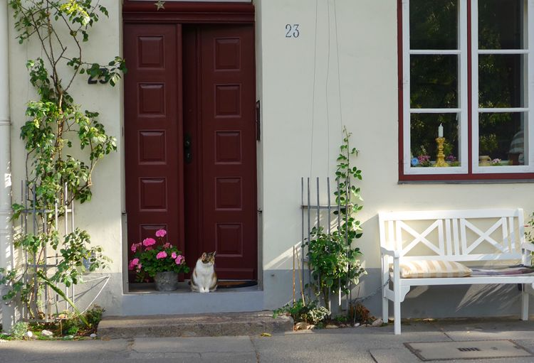 Bench Peaceful Place Street Cat Building Exterior Plant Built Structure Building Architecture Door Entrance Window House Residential District Potted Plant Flower