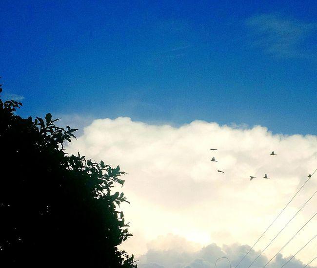 No People Bird Tree A Cloud Blue Sky Landscape