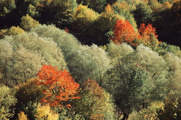 High angle view of plants and trees in forest during autumn