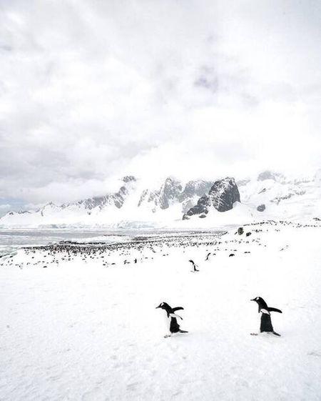 Nature Snow Winter Pinguin Pinguine Felling