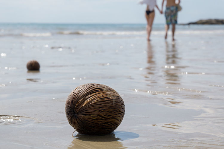 Coconut at beach with couple in background on sunny day