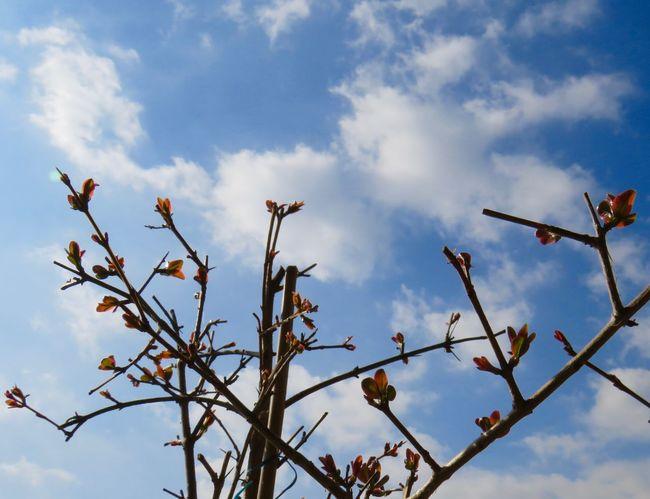 """ árbol de la esperanza , mantente firme "" Frida Kahlo Mi Granado Sky Day Outdoors Cloud - Sky No People Low Angle View Nature"