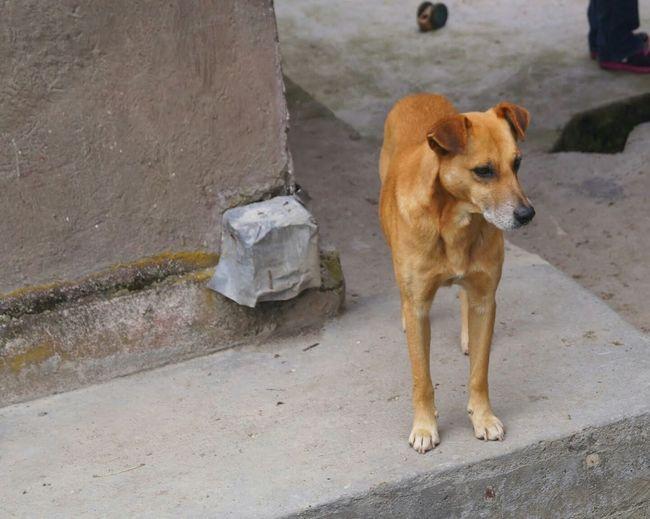 Dog❤ Animal Dog Love Hello World Doggie
