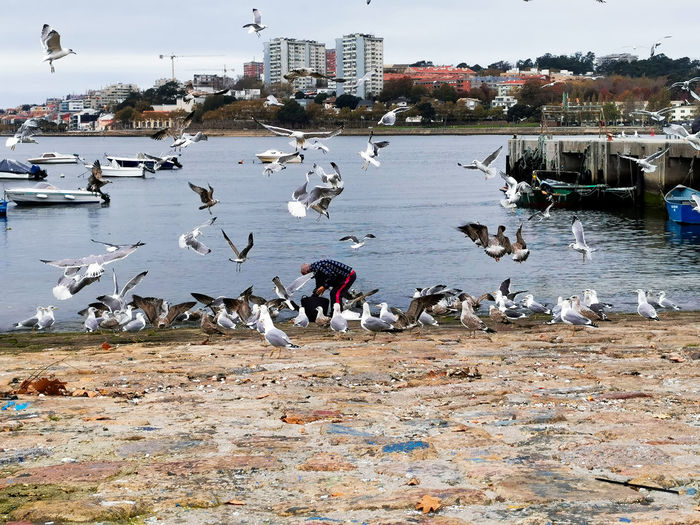 Seagulls flying over beach in city