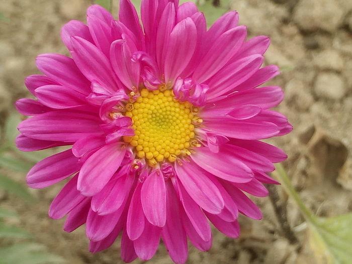flower background Flower Pink Flowers Floral Flora Beautiful Flower Single Flower Garden Floryculture Day No Parson