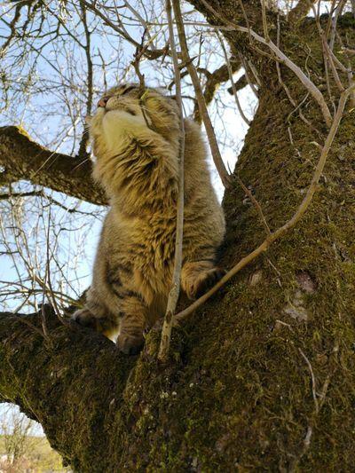 Cat Tree Branch