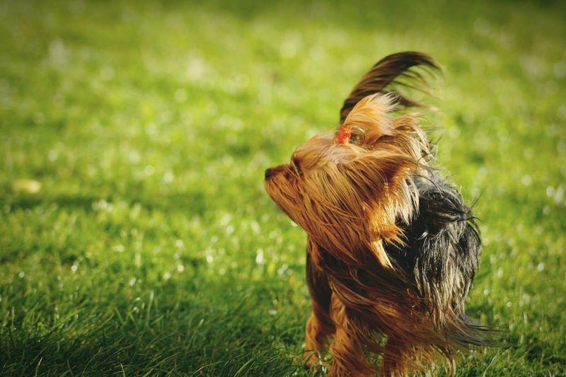 Cute dog outdoors on grass