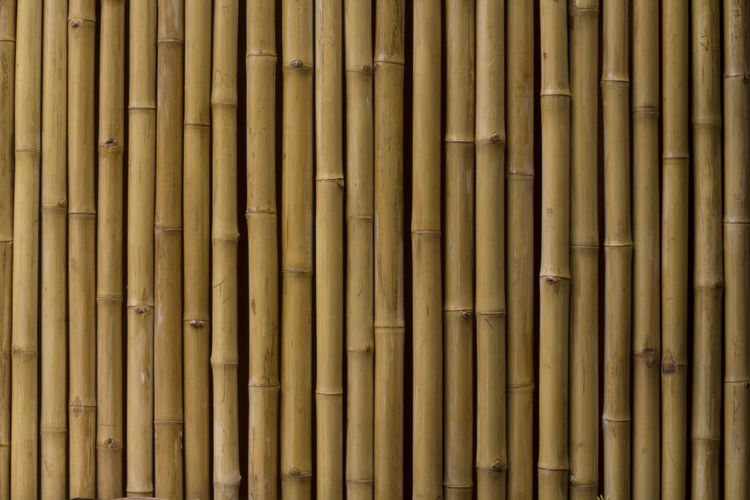 Backgrounds Full Frame No People Wood - Material Pattern Brown Close-up Bamboo - Material Day Large Group Of Objects Bamboo Abundance Bamboo - Plant Repetition Outdoors Architecture Textured  Built Structure Nature Side By Side