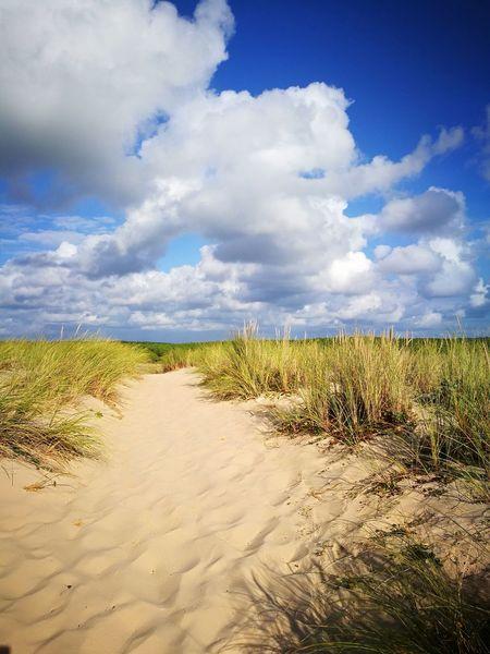 beach Sand Blue Summer Cereal Plant Sky Landscape Cloud - Sky Capture Tomorrow EyeEmNewHere