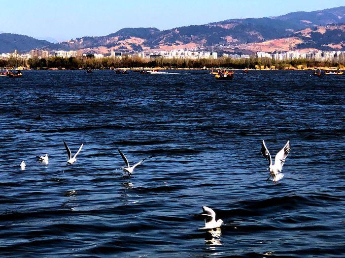 邛海公园 Animals In The Wild Water Animal Themes Nature Lake Mountain Bird