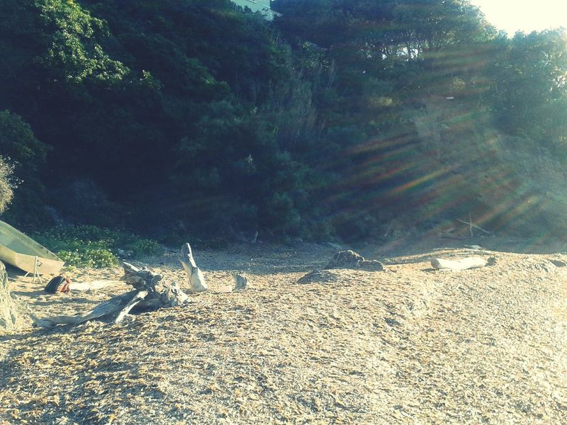 Relax Place Italian Beach Forest Pinaceae Tranquility