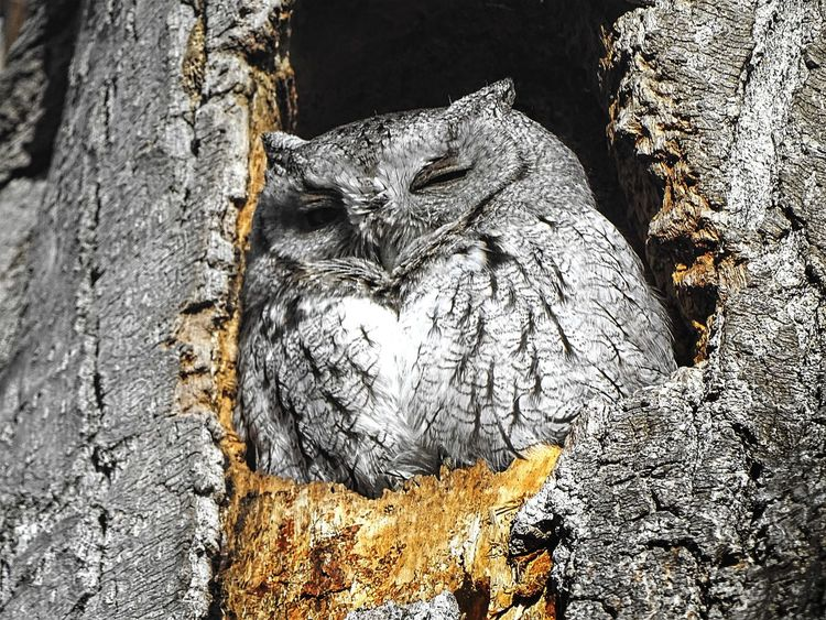 Sunlight Shadow No People Textured  Nature Outdoors Day Animals In The Wild Close-up Animal Themes One Animal Perching Animals In The Wild Wyoming Worland WY Beak Animal Wildlife Owl Screech Owl