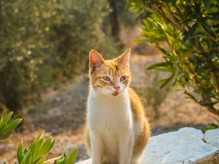 Cat Sitting On Retaining Wall In Yard