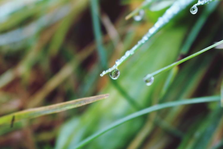 Close-Up Of Dew Drops On Grass Blades