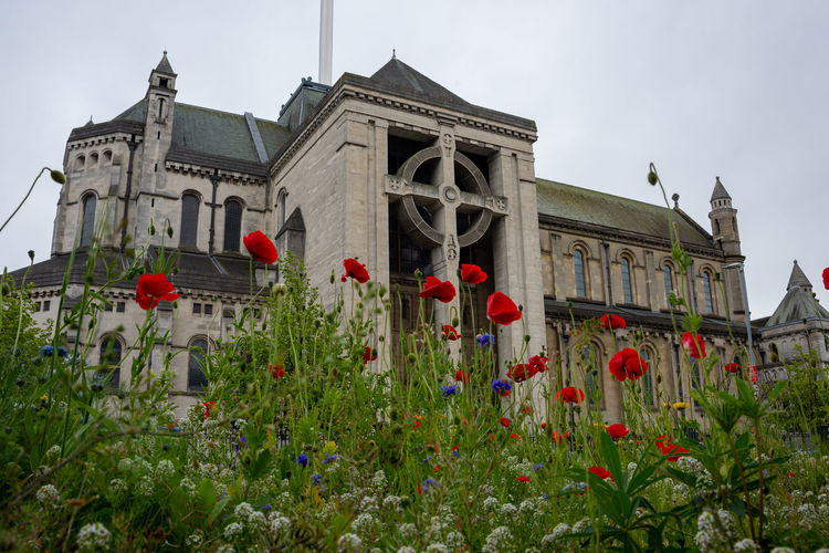 Low angle view of red flowering plants against building