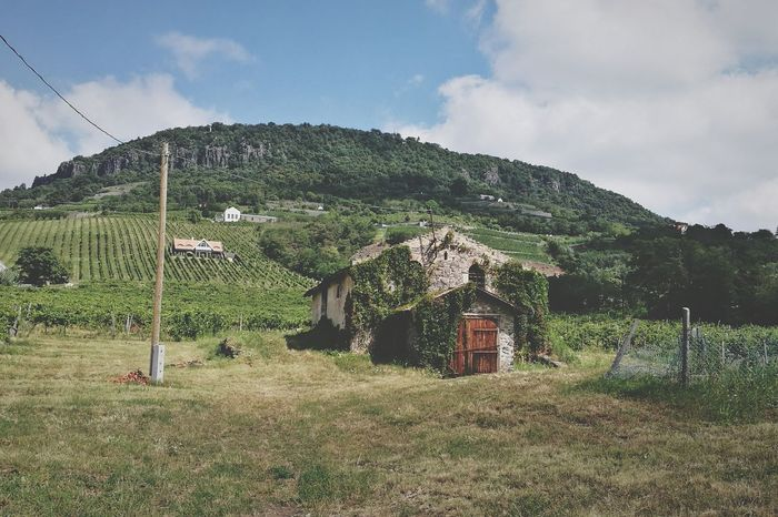 Cloud - Sky No People Outdoors Grass Nature Grape Wine Wineyards Winelovers  Winecountry Wine Grapes
