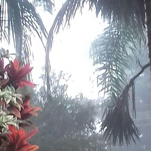 Neblina ...