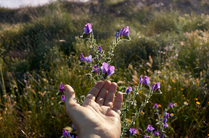 Cropped hand against purple flowering plants on field