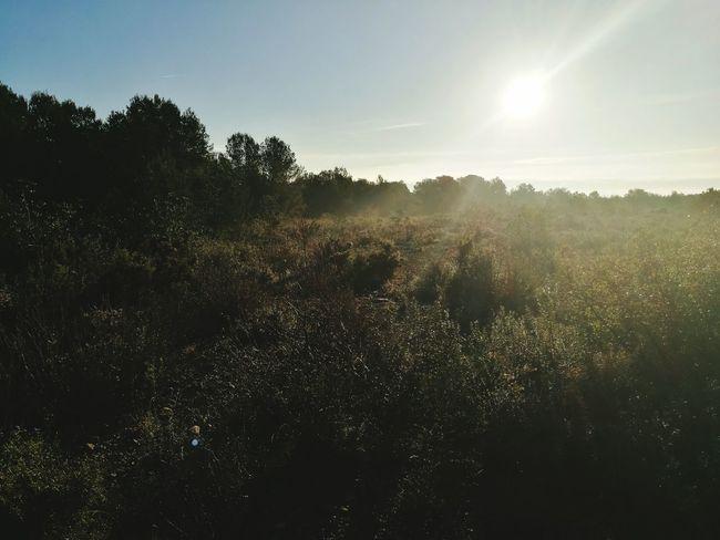 Amanecer con neblinas Nature First Eyeem Photo