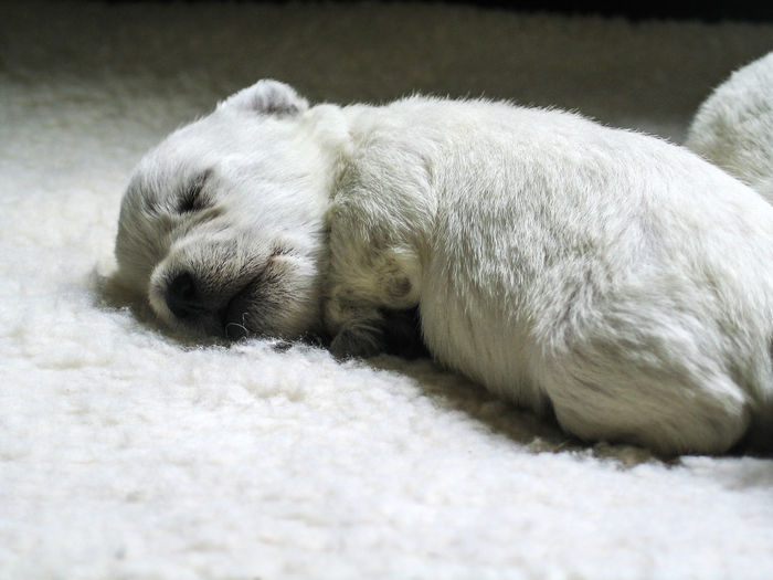 Close-up of a dog sleeping on rug