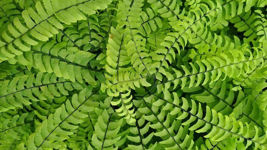 Beautiful Nature Leaf Adventure Green Luxury Peaceful Botanical Leaves Garden The Still Life Photographer - 2018 EyeEm Awards EyeEmNewHere The Traveler - 2018 EyeEm Awards