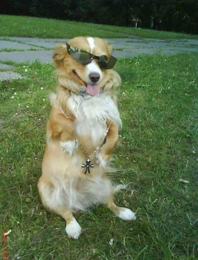 My Dog Style My Dog Is Cooler Than Your Kid. Cool Dog