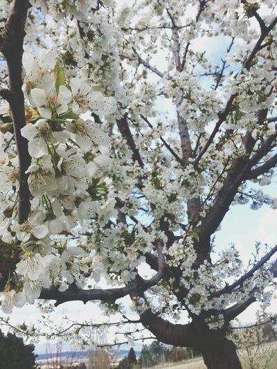 okie dokie Flowers