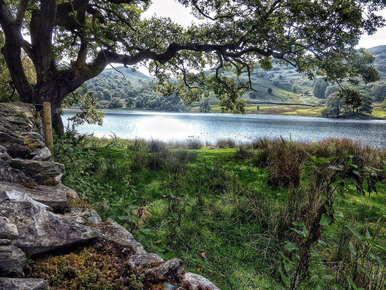 tree, beauty in nature, water, nature, scenics, tranquil scene, lake, growth, tranquility, day, no people, grass, landscape, outdoors, green color, branch, plant, travel destinations, mountain, sky