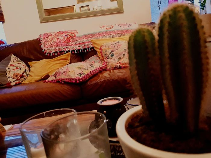 Art Studio Table Railway Village Morning Light Cactus Mirror Reflection October EyeEm Selects Drink Close-up Succulent Plant Spiked