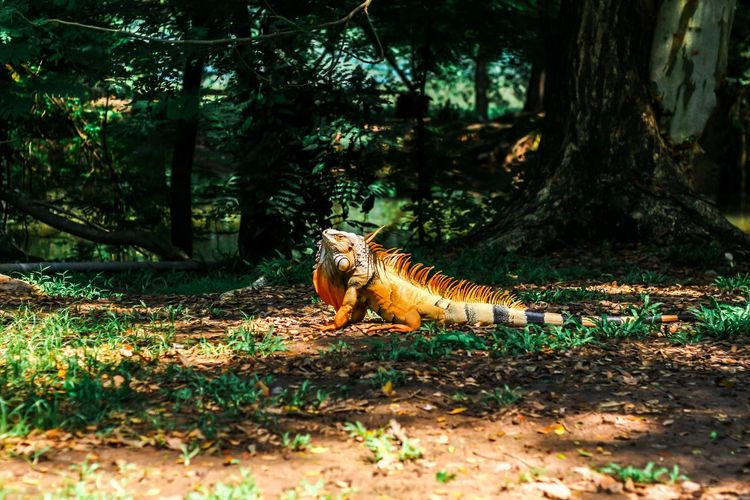 View of a reptile on field