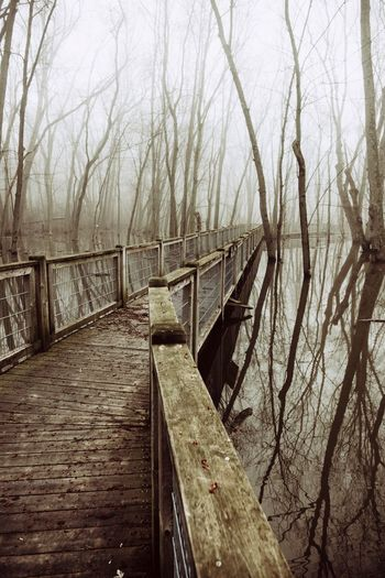 Tranquility Wood Swamp Water Water Reflections Trees Fog Foggy Foggy Morning Tree Bare Tree Footbridge Bridge - Man Made Structure vanishing point Diminishing Perspective Calm
