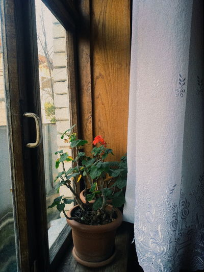 EyeEm Best Shots The Week on EyeEm Flower Curtain Window Window Sill Potted Plant Window Box Architecture Close-up Plant Built Structure Flower Pot Houseplant Growing Entryway Closed Door Cactus Decorative Urn Petunia Young Plant Florist Bonsai Tree