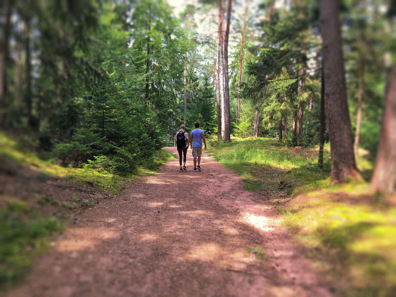 forest track Beauty In Nature Dahn Day Dirt Road Footpath Forest Forest Path Forest Track Forestwalk Green Leisure Activity Nature Nature Outdoors People Rear View Road The Way Forward Togetherness Tree Two People Walk Walking Walking Around Breathing Space