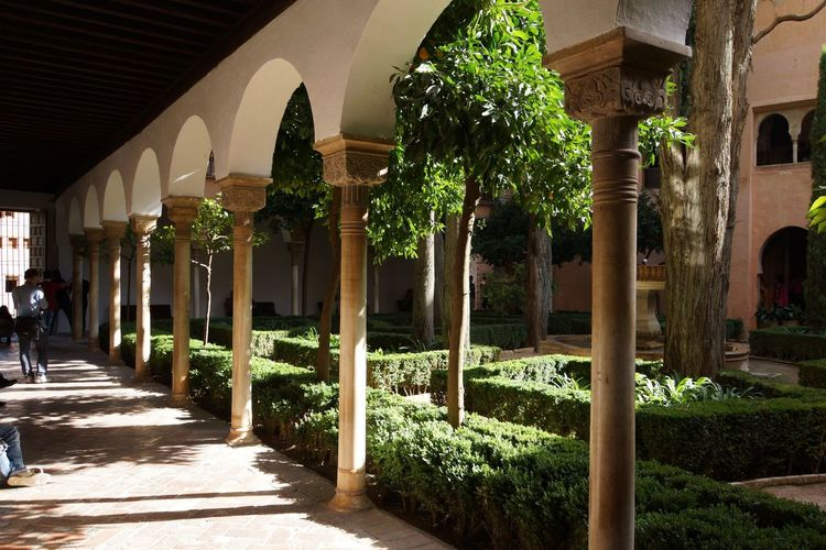Alhambra 21 Alabaster Stucco Andalusian Architecture Arabesques Architecture Building Exterior Built Structure Day Dekorative Kohlblume Geometrical Patterns Growth Islamic Art Islamic Calligraphy Mudejar Art Muqarnas Ceiling Decoration Muslim Empire Nasriden Palac Palm Tree Plant Tree Wall Pattern