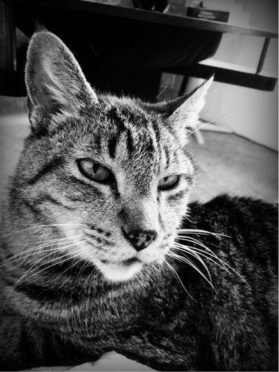 Pets Corner Cat Petlover Cats Cat♡ Cat Lovers